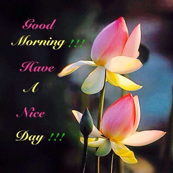 Good Morning Have A Nice Day Flowers Pictures Photos And
