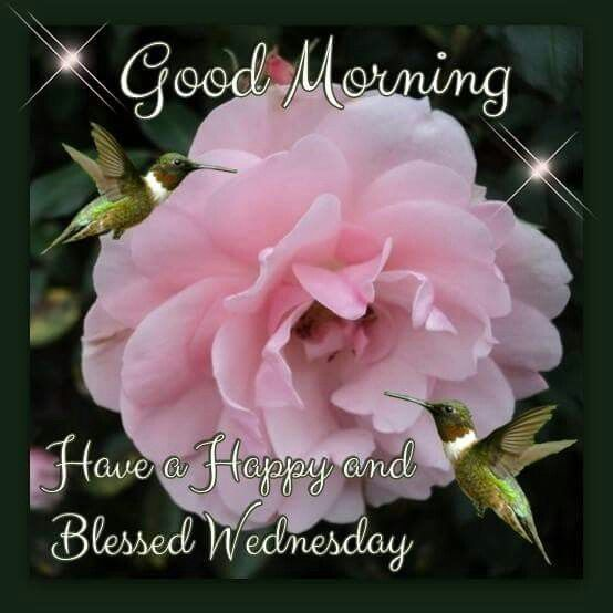 Good Morning Have A Happy And Blessed Wednesday Pictures