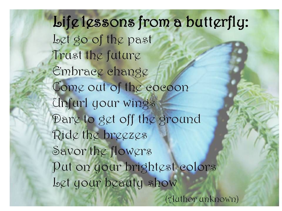 Life Lessons From A Butterfly... Pictures, Photos, And
