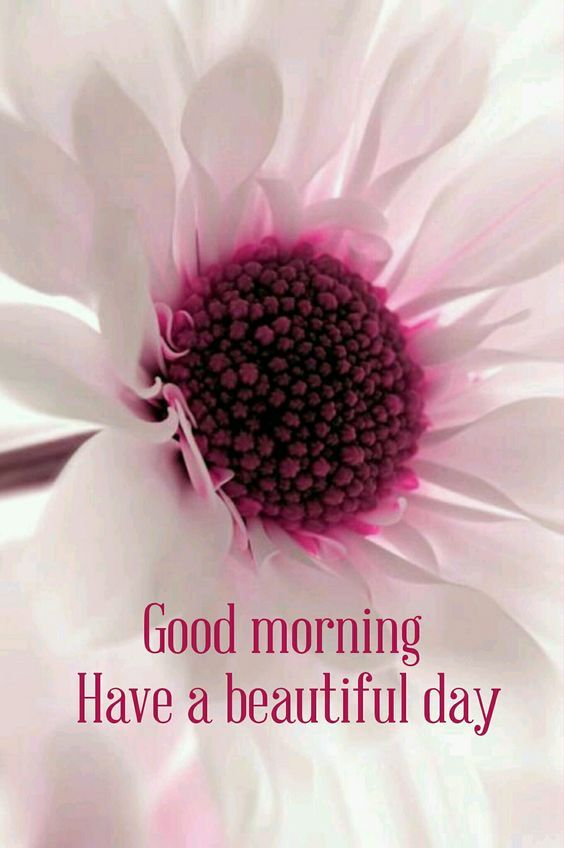 good morning have a beautiful day flower quote pictures photos