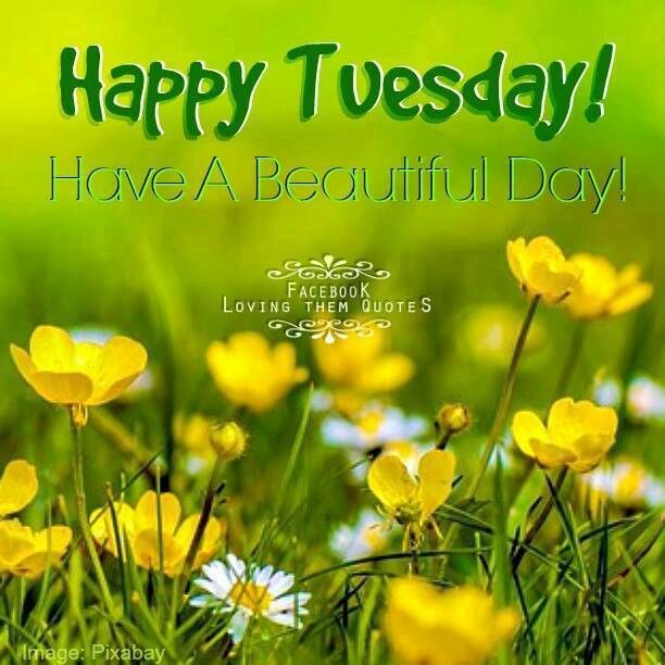 Beautiful Day Quotes: Happy Tuesday Have A Beautiful Day Summer Quote Pictures