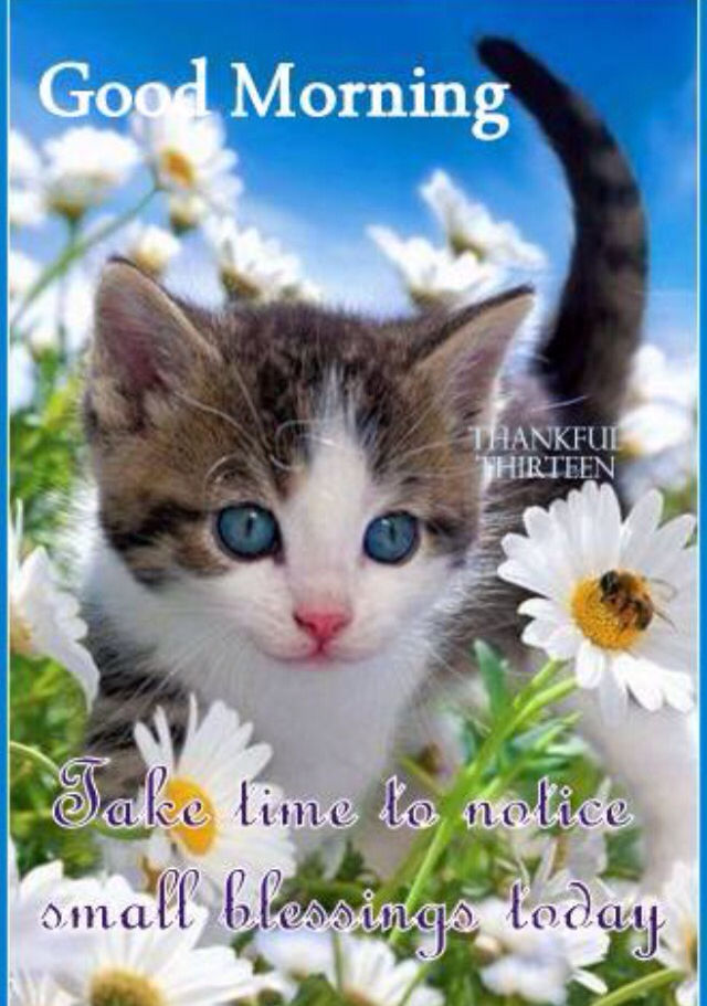 Good Morning Quotes Cat : Good morning pictures photos and images for facebook