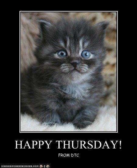 Image result for happy thursday kittens