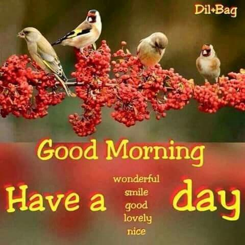 Good Morning Have A Wonderful Lovely Nice Day Pictures Photos And Images For Facebook Tumblr Pinterest And Twitter