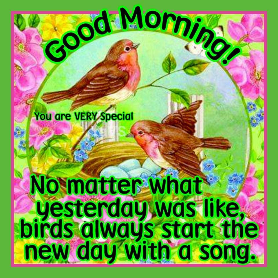 good morning no matter what yesterday was like birds always start