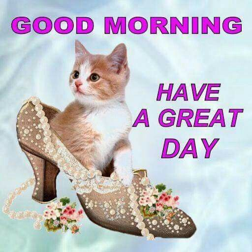 Good Morning Have A Great Day Cute Cat Pictures, Photos, and Images for  Facebook, Tumblr, Pinterest, and Twitter