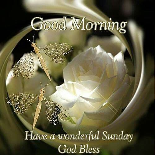 good morning have a wonderful sunday god bless pictures