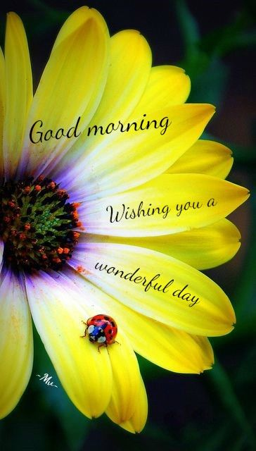 good morning wishing you a wonderful day flower quote pictures