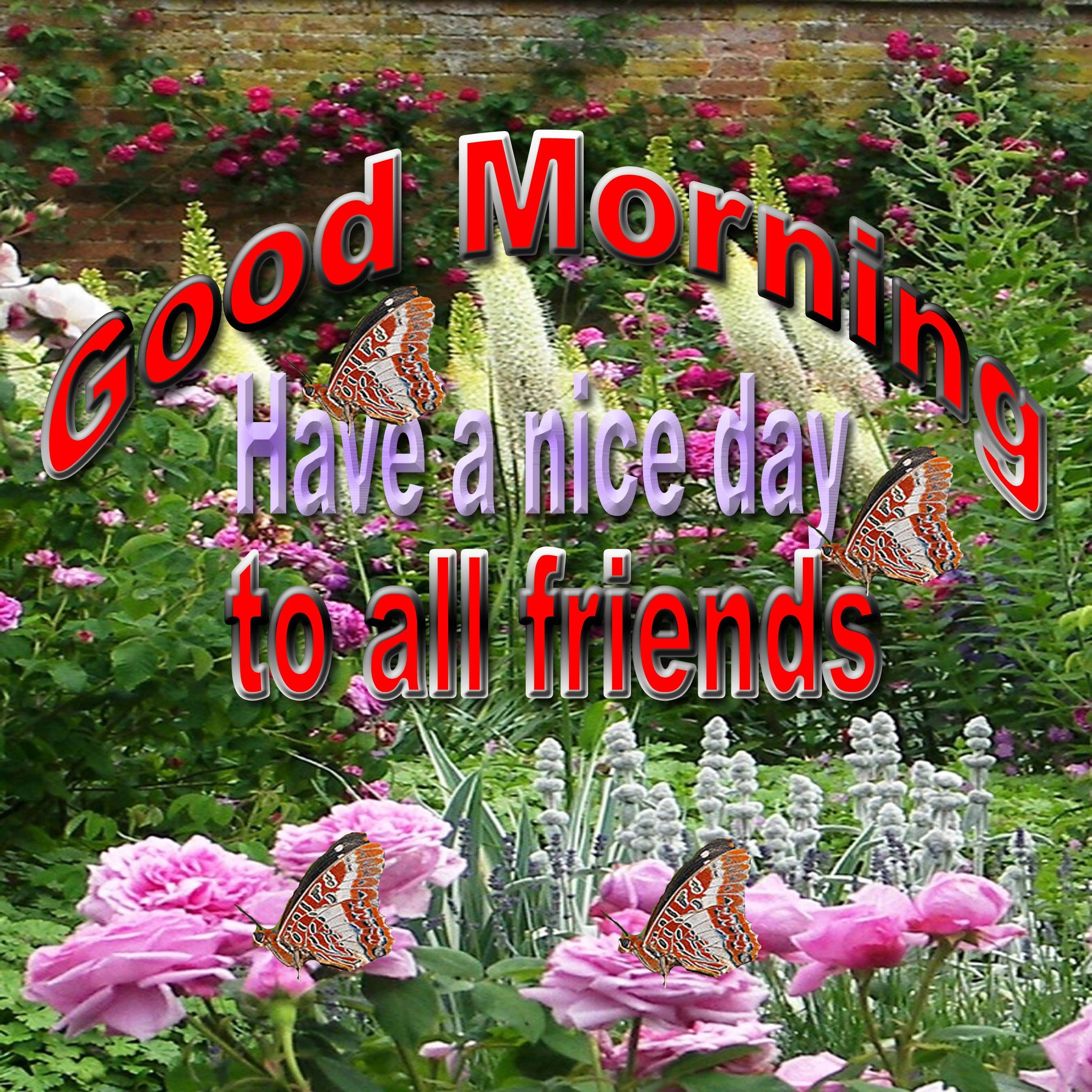 Good Morning, Have A Nice Day To All Friends Pictures