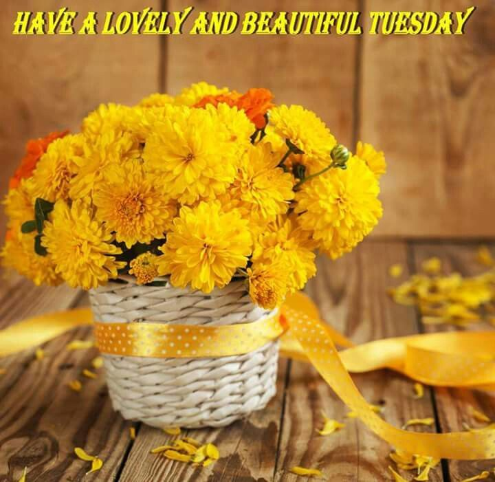 Have A Lovely And Beautiful Tuesday Pictures Photos And