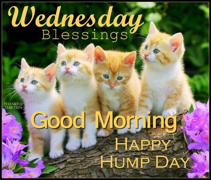 Wednesday Blessings, Good Morning, Happy Hump Day Pictures