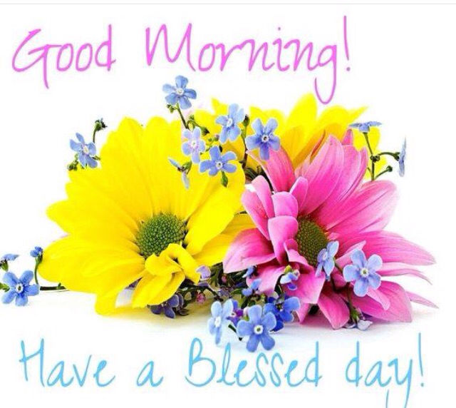 Good Morning Japanese Greeting : Good morning have a blessed day flowers quote pictures