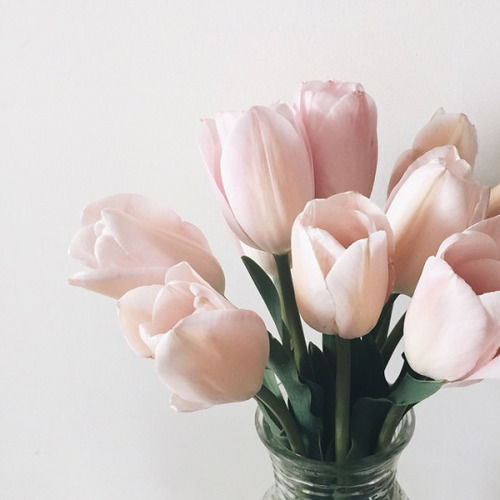 Light Pink Tulips Pictures Photos And Images For