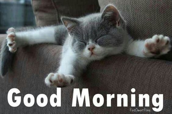 Good Morning Cute : Good morning cute kitten image pictures photos and