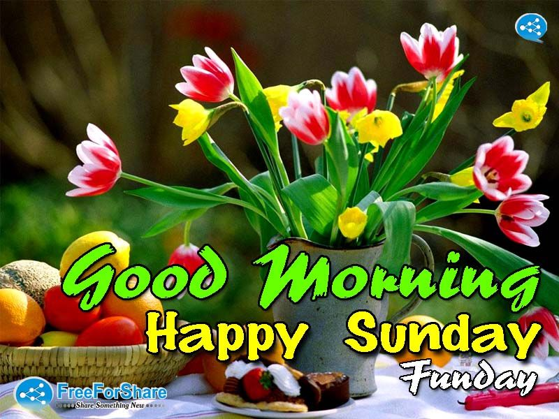 Good Morning Happy Sunday Funday Pictures Photos And