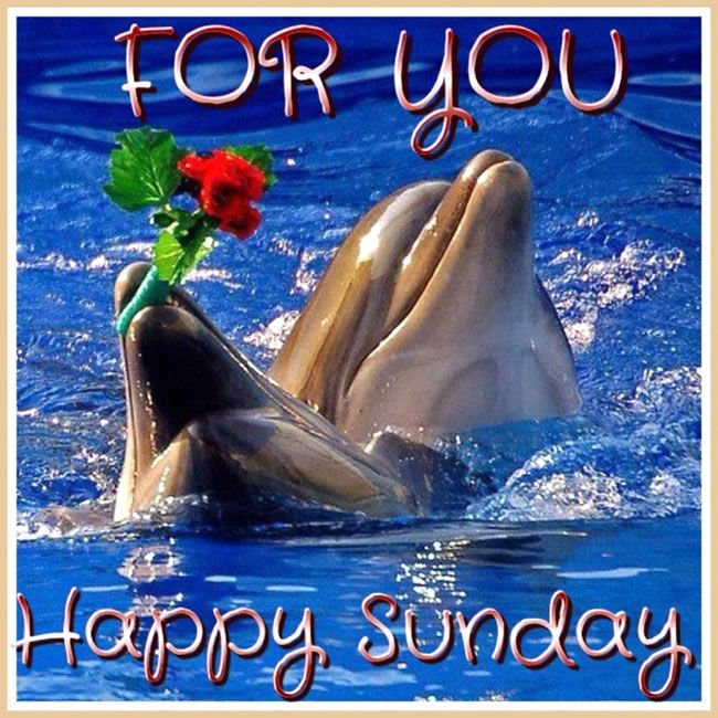 Good Morning Sunday Whatsapp : Happy sunday pictures photos and images for facebook