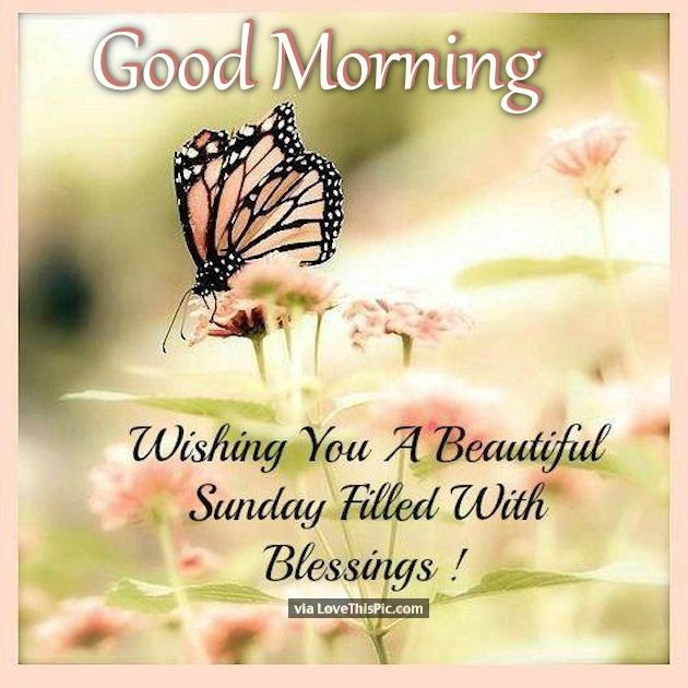 Good Morning Wishing You A Beautiful Sunday Pictures