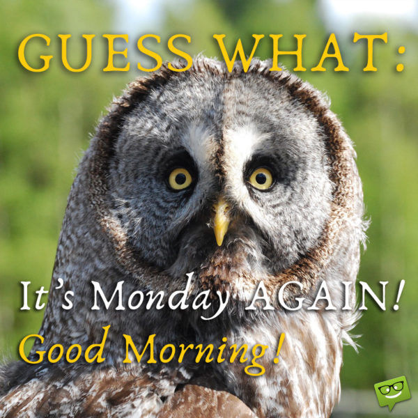 Guess What It S Monday Again Pictures Photos And Images
