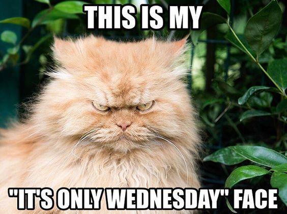Funny Animal Wednesday Meme : Girl meme face quotes