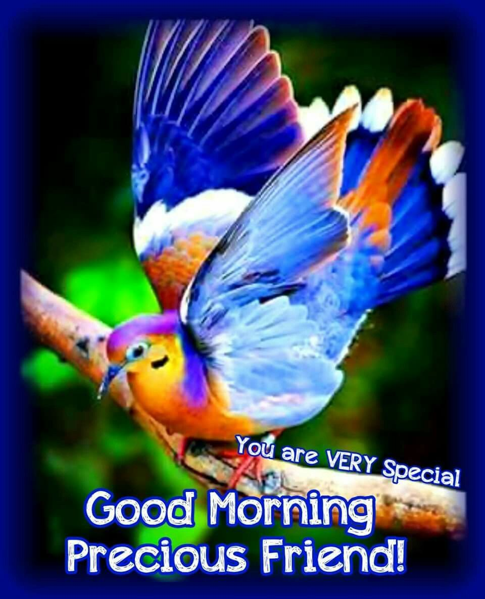 Good Morning Precious Friend Pictures Photos And Images
