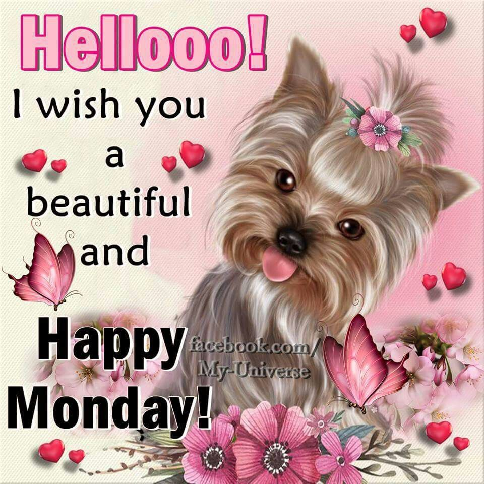 Monday Again? Have A Good One Pictures, Photos, and Images ... |Monday Morning Graphics