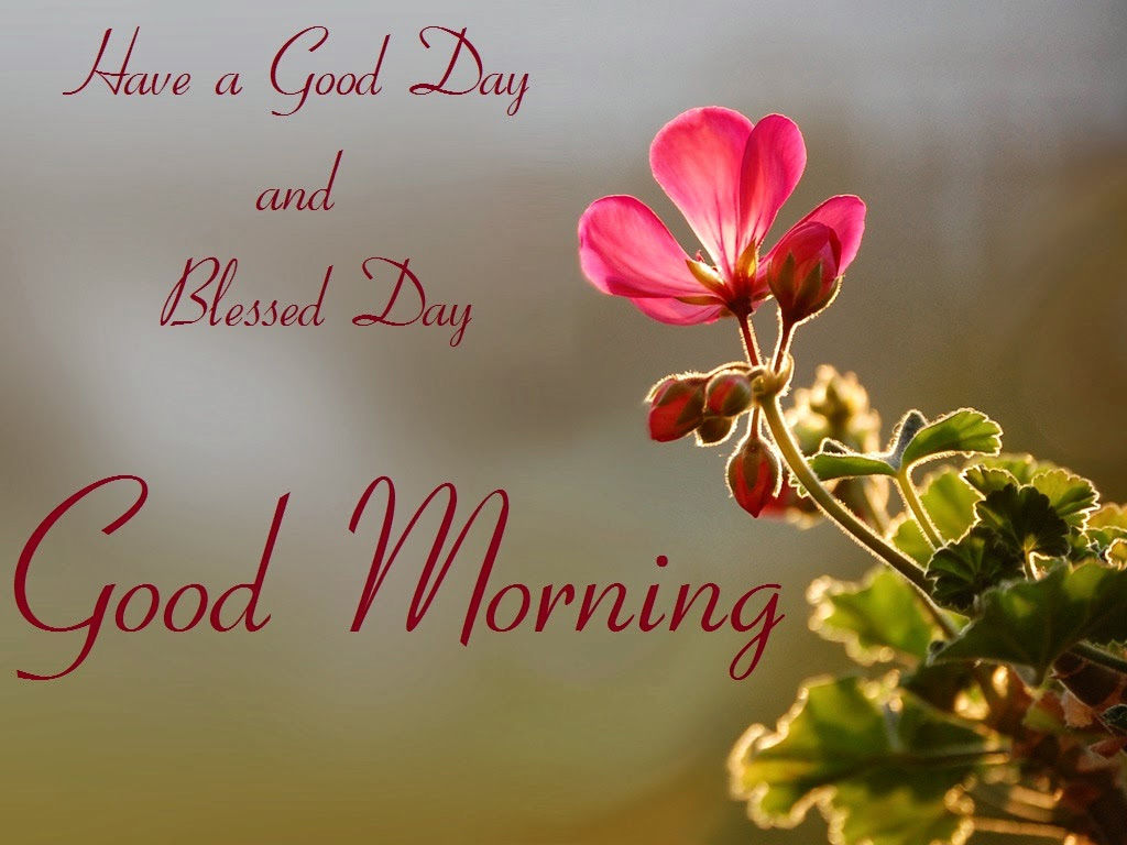 Have A Good Day And Blessed Day Good Morning Pictures Photos And
