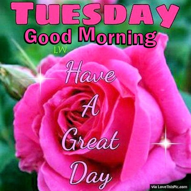 Tuesday Good Morning Have A Great Day Pictures Photos