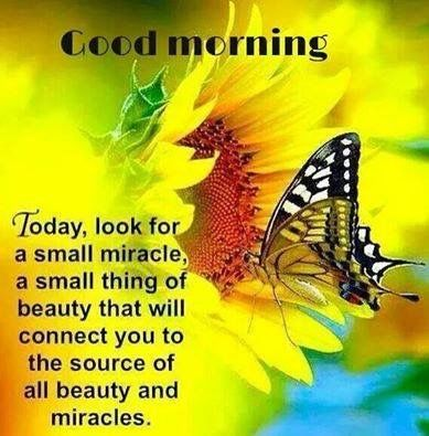 Image result for good morning miracle images