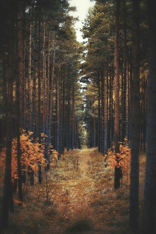 Autumn Forest Pictures, Photos, and Images for Facebook ... | 499 x 750 jpeg 91kB