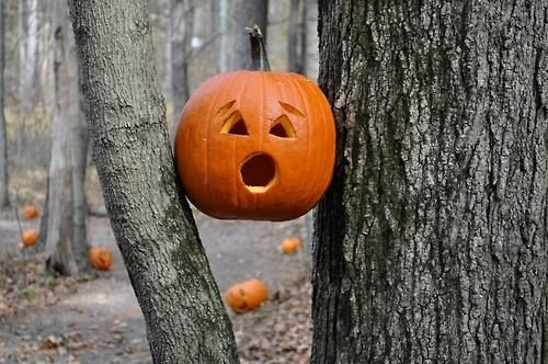 shocked jack o lantern pictures photos and images for