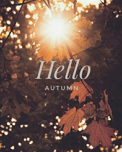 67 Best Trending News Viral Videos Images On Pinterest: Hello Autumn Pictures, Photos, And Images For Facebook