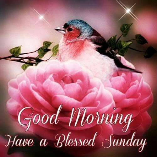 Good morning have a blessed sunday pictures photos and images for