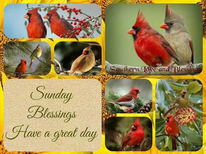 Sunday Blessings, Have A Great Day Pictures, Photos, And