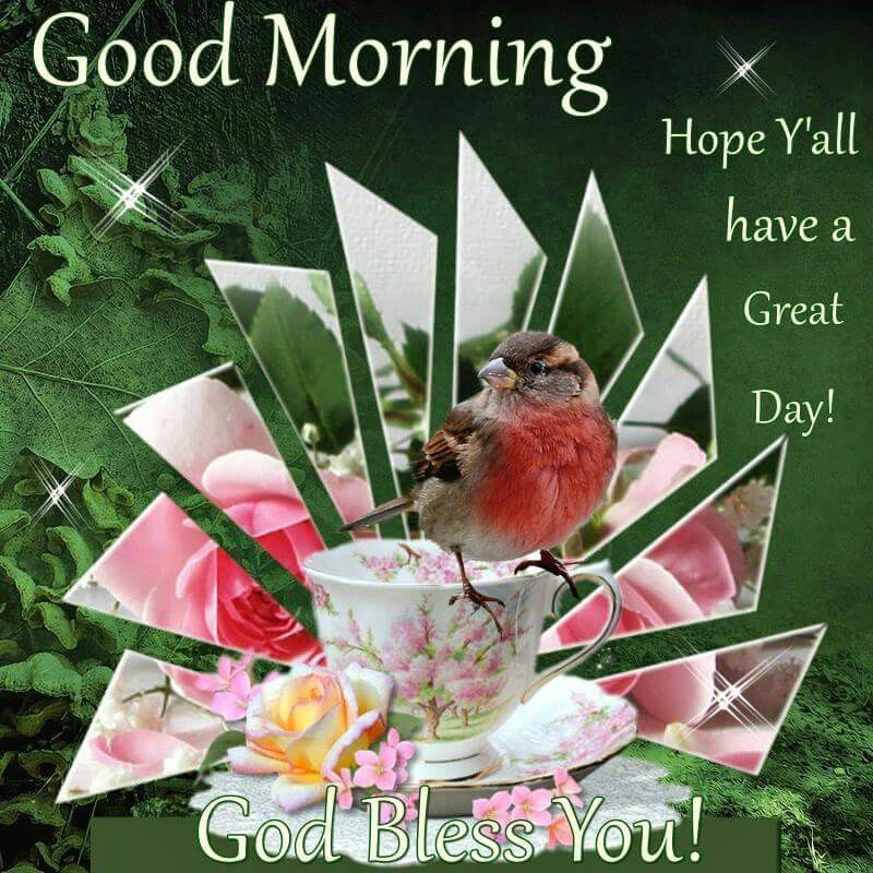 Good Morning Y All : Good morning hope y all have a great day god bless you