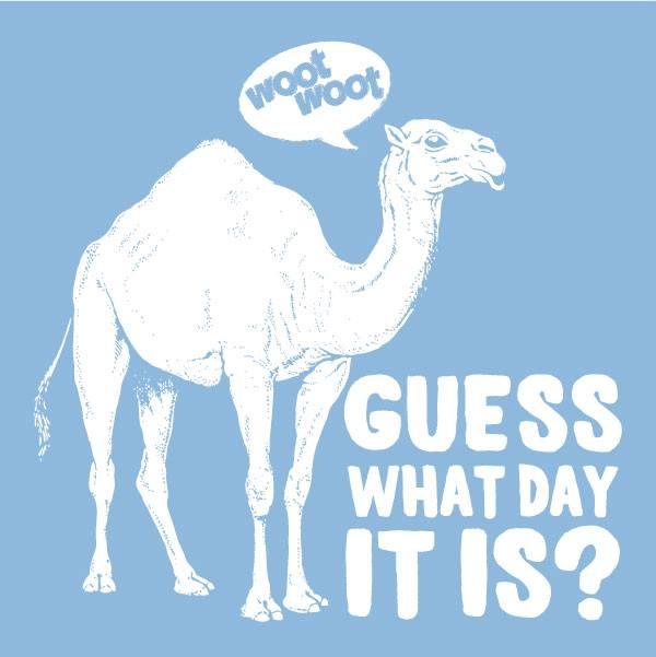 Hump Day Hump Day