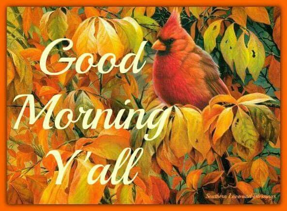Good Morning Y All : Good morning y all pictures photos and images for