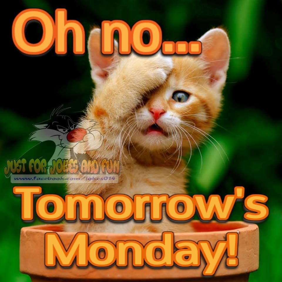 Oh No... Tomorrows Monday Pictures, Photos, and Images for ...