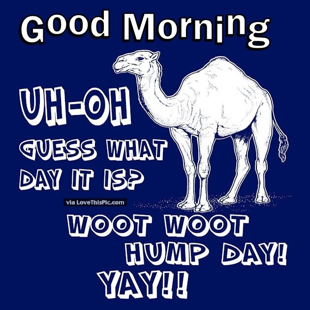 Good Morning Uh Oh Guess What Day It Is Hump Day Pictures ...