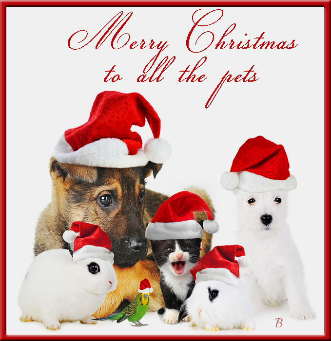 merry christmas to all the pets