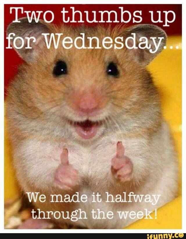 Good Morning Meme Wednesday : Two thumbs up for wednesday pictures photos and images