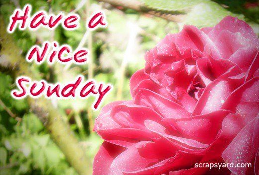 Have A Nice Sunday Pictures, Photos, And Images For