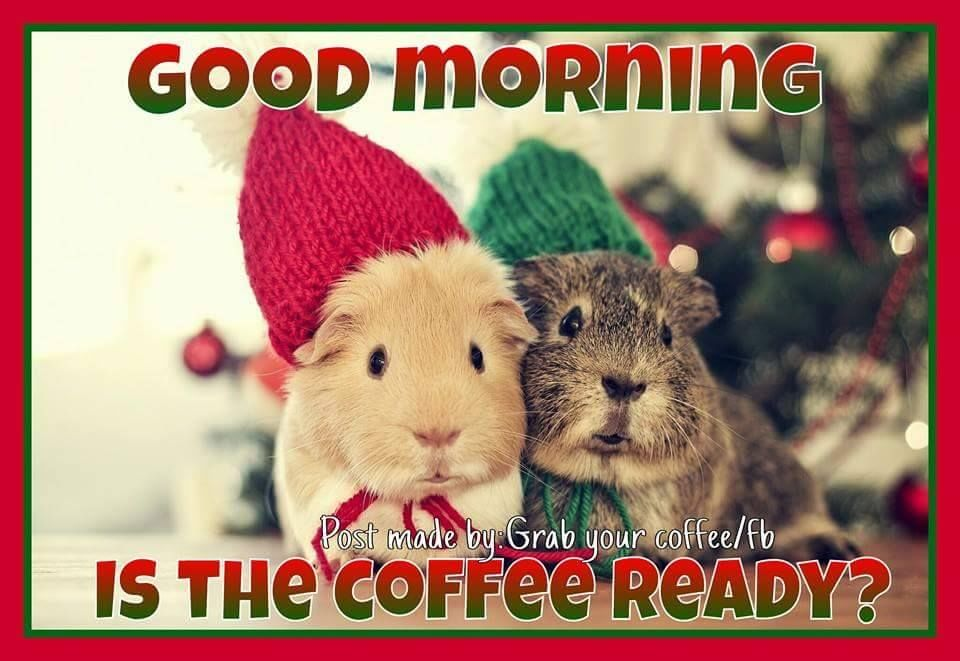 Coffee And Christmas Quotes: Good Morning, Is The Coffee Ready? Pictures, Photos, And