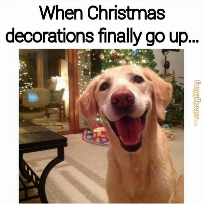 When Christmas Decorations Finally Go Up... Pictures