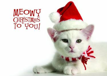 Meowy Christmas.Meowy Christmas To You Pictures Photos And Images For
