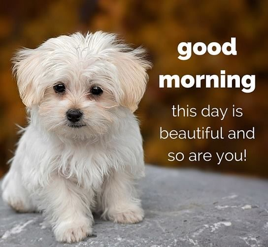 Good Morning Beautiful You Facebook : Good morning this day is beautiful and so are you