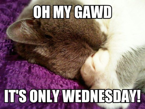 OMG it&#39-s only Wednesday.