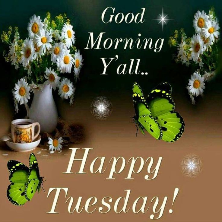 Good Morning Y All : Good morning y all happy tuesday pictures photos and