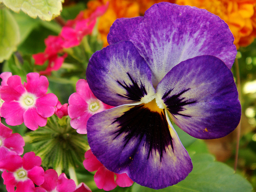 pretty exotic flower pictures, photos, and images for facebook, Beautiful flower