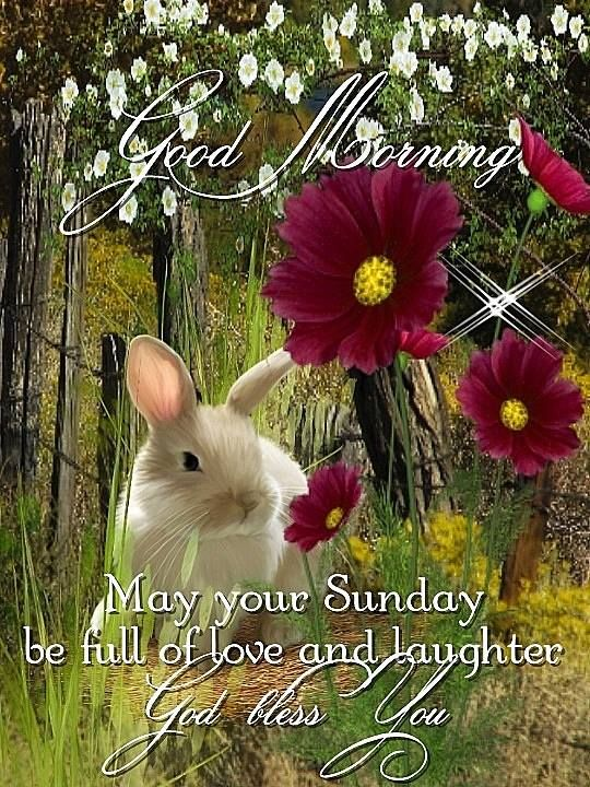 Good Morning Sunday Love : Good morning sunday love pictures photos and images for