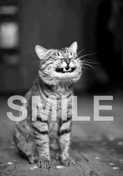 Smile Cat Pictures  Photos  And Images For Facebook